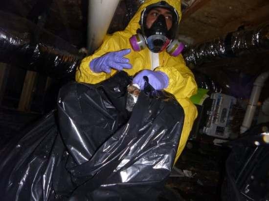 sewage damage restoration